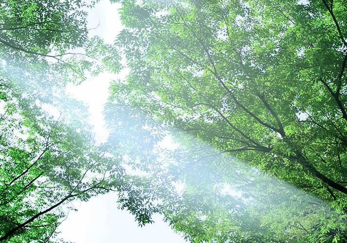 いにしえ自然そして祈り